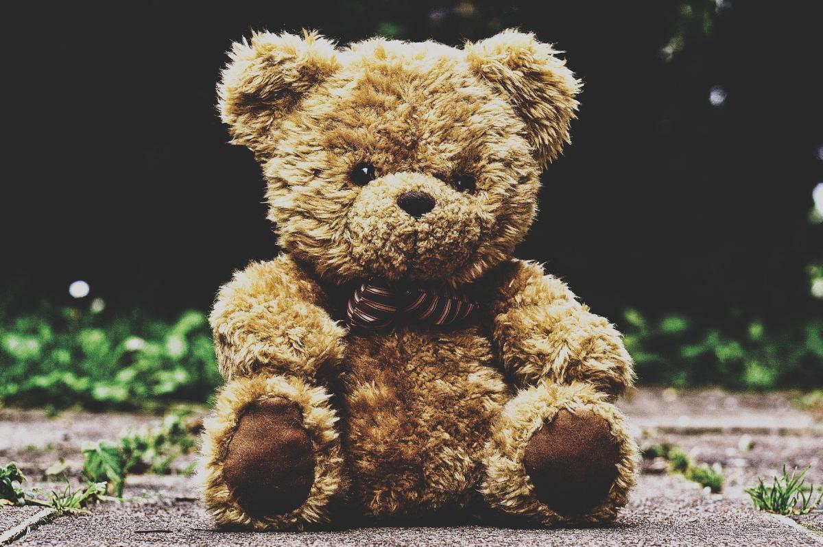 Teddy Bear TED